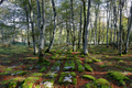 Limestone pavement surface in Monte Santiago nature forest in Spain. - PhotoDune Item for Sale