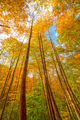 Colorful Trees In a Wild Forest - PhotoDune Item for Sale