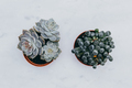 Cactus and succulent plant on a marble table. Flat lay minimal - PhotoDune Item for Sale