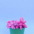 Colorful cactus design art. Minimal cactus lover concept - PhotoDune Item for Sale