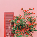 Plants on pink concept. Tropical Flower on pink wall background. - PhotoDune Item for Sale