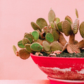 Plants on pink design concept. Cactus on pink background wall - PhotoDune Item for Sale