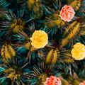 Cacti roses decor. Minimal fashion cactus creative design - PhotoDune Item for Sale