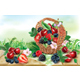 Berries Mix in Basket on a Wooden Surface - GraphicRiver Item for Sale