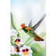 Hummingbird Tufted Coquette Lophornis Ornatus over White Orchids - GraphicRiver Item for Sale