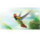 Hummingbird Tufted Coquette Lophornis Ornatus Over Palm Leaves - GraphicRiver Item for Sale