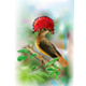 Amazonian Royal Flycatcher on a Tropical Background - GraphicRiver Item for Sale