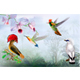 Tropical Bright Birds and Hummingbird on a Rainforest Background - GraphicRiver Item for Sale