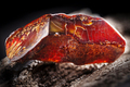 Natural amber. A piece of dark red semi transparent natural amber on piece of stoned wood - PhotoDune Item for Sale