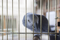 Parrot in a cage. - PhotoDune Item for Sale