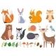 Woodland Animals - GraphicRiver Item for Sale