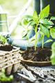 Garden - PhotoDune Item for Sale