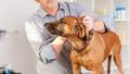 Bavarian Welding Dog Grooming - PhotoDune Item for Sale