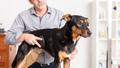 Sweet Dog Grooming - PhotoDune Item for Sale