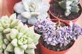 Mix of beautiful succulent plants - PhotoDune Item for Sale