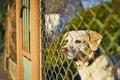 Dog waiting behind fence - PhotoDune Item for Sale