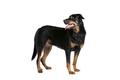 dog - PhotoDune Item for Sale