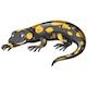 Salamander - GraphicRiver Item for Sale