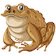 Frog - GraphicRiver Item for Sale
