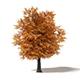 Common Oak 3D Model 7m - 3DOcean Item for Sale