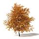 Common Oak 3D Model 6.4m - 3DOcean Item for Sale
