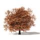 Sugar Maple 3D Model 10.4m - 3DOcean Item for Sale