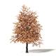 Sugar Maple 3D Model 5.5m - 3DOcean Item for Sale