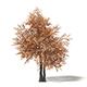 Sugar Maple 3D Model 6.6m - 3DOcean Item for Sale