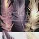Transparent PNG Feathers - GraphicRiver Item for Sale