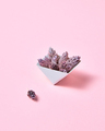 Pine cones in a cardboard triangular box on a pink background with copy space for text. Creative - PhotoDune Item for Sale