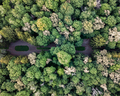 Top view of the green park on a summer day. Aerial view from the drone - PhotoDune Item for Sale