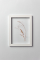 Decorative composition of seedhead plant in a rectangular frame on a light background - PhotoDune Item for Sale
