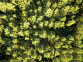 Top view of a summer deciduous forest on a clear summer day. Aerial view with dron like foliage - PhotoDune Item for Sale