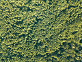 Aerial view of the drone on the greenery of trees on a summer day. Natural background - PhotoDune Item for Sale