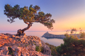 Amazing tree growing out of the rock at sunrise - PhotoDune Item for Sale