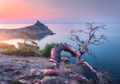 Amazing old tree growing out of the rock at sunrise. Landscape - PhotoDune Item for Sale
