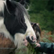 Hand Feeding Horses - VideoHive Item for Sale