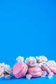 French macaroon cookies with cherry blossom flowers on a sky blue background with copy space. Color - PhotoDune Item for Sale