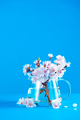 Cherry blossom in a glass teapot on a sky blue background with copy space. Color block object - PhotoDune Item for Sale