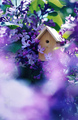 Birdhouse on a blooming lilac tree, tiny nesting box in spring flowers. Creative spring photography - PhotoDune Item for Sale