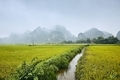 Rice fields against karst mountains - PhotoDune Item for Sale