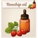 Rosehip Oil and Berries in Bottle Illustration - GraphicRiver Item for Sale