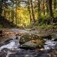 Gentle Stream in the Park Binaural Ambience Loop