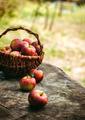 Fresh Organic Apples - PhotoDune Item for Sale