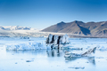 Beautiful view of icebergs in glacier lagoon, Iceland, global warming and climate change concept - PhotoDune Item for Sale