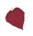 Red Leaf isolated on white - PhotoDune Item for Sale