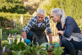 Senior couple picking vegetables - PhotoDune Item for Sale
