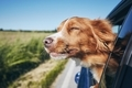 Dog travel by car - PhotoDune Item for Sale