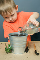 caucasian blond child boy watering ground for planting money tree plant in metal flower pot - PhotoDune Item for Sale