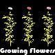 Growing Flowers - VideoHive Item for Sale